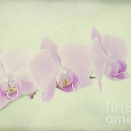 Alana Ranney - Pastel Orchids