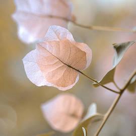 Julie Palencia - Pastel Petals