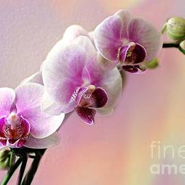 Judy Palkimas - Pastel Rainbow Orchid