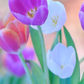 Kaye Menner - Pastels of Spring