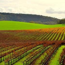 Antonia Citrino - Pastoral Vineyards of Asti