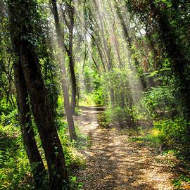 Elena Elisseeva - Path in sunlit forest