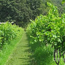 Dawn Gari - Path Thru The Vineyard