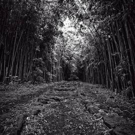 Edward Fielding - Pathway through a bamboo forest Maui Hawaii