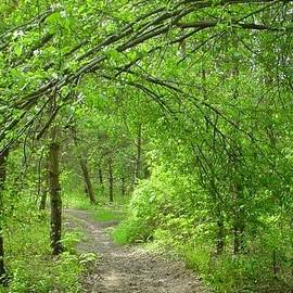 Melissa McCrann - Pathway Through Nature