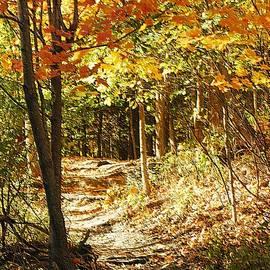 Kathleen Struckle - Pathway Through The Woods
