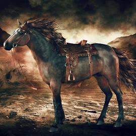 Shanina Conway - Patience Bay Horse