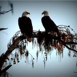 Orcinus Fotograffy - National Treasures at Lake Martin Louisiana