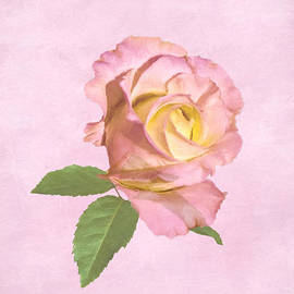 Delores Knowles - Peace Rose