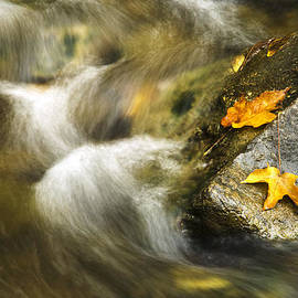 Christina Rollo - Peaceful Creek