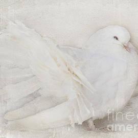 Barbara McMahon - Peaceful Existence White on White