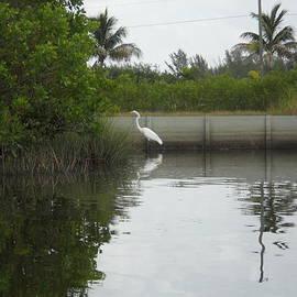 JP Launay - Peaceful Great Egret