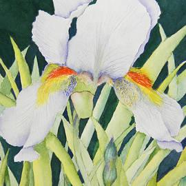 Anne Dean - Peaceful Iris