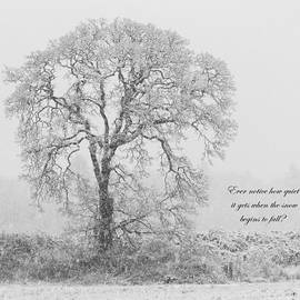 Angie Vogel - Peaceful Snowfall