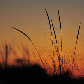 Terry DeLuco - Peaceful Sunset