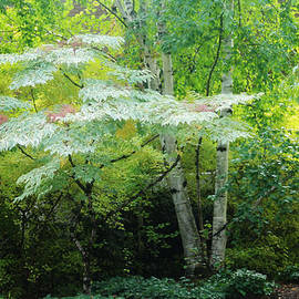 Valerie Loop - Peaceful Tree
