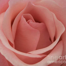 Arlene Carmel - Peach Rose