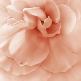 Jennie Marie Schell - Peach Ruffled Begonia Flower