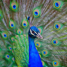 Alan Tunnicliffe - Peacock