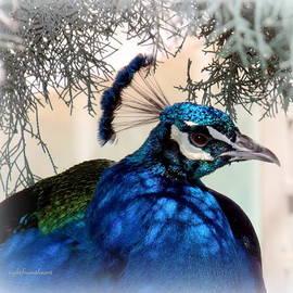 Bob and Kathy Frank - Peacock