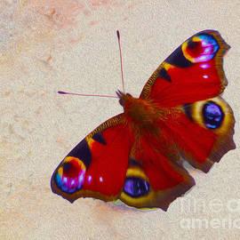 P Donovan - Peacock Butterfly