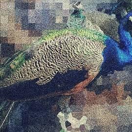 Dana G - Peacock