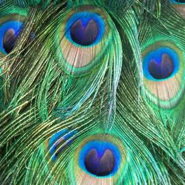 Eric  Schiabor - Peacock Feathers Blue and Green