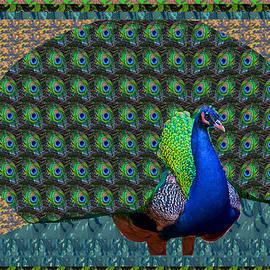 Navin Joshi - Peacock Graphic design based on photographic image artist NavinJOSHI