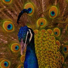 Jeff  Swan - Peacock