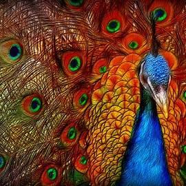 Lilia D - Peacock