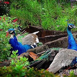 Kathleen Struckle - Peacocks In The Garden
