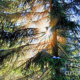 Mariola Bitner - Peeking through God