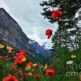 Linda Bianic - Peaks and Poppies