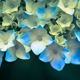 The Dreamery Fine Art Photography - Peek A Blue