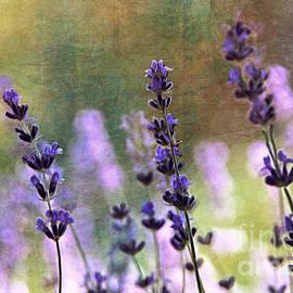 Rene Crystal - Peek A Boo Lavender...