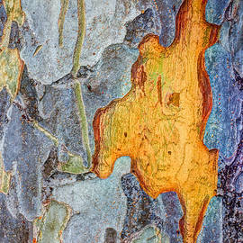 Heidi Smith - Peeling Bark Elm Abstract
