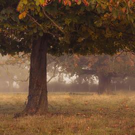 Chris Fletcher - Peeping under the autumn canopy