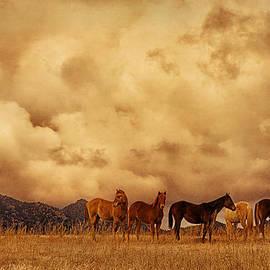 Priscilla Burgers - Peeples Valley Horses