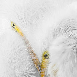 Dawn Currie - Peering Thru Feathers