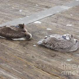 Deborah DeLaBarre - Pelican resting