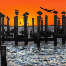 Bo Lamey - Pelican Sunset