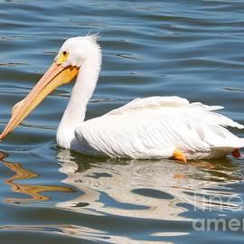 Carol Groenen - Pelican Swirls