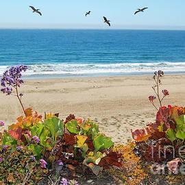 Debra Thompson - Pelicans And Flowers on Pismo Beach