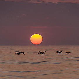 Island Sunrise and Sunsets Pieter Jordaan - Pelicans in a row