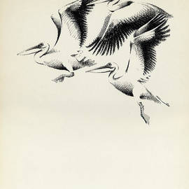 Mamoun Sakkal - Pelicans
