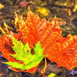 Michael Mazaika - Pennsylvania Country Roads - Autumn Colorfest in the Creek No. 2 - Marsh Creek Adams County