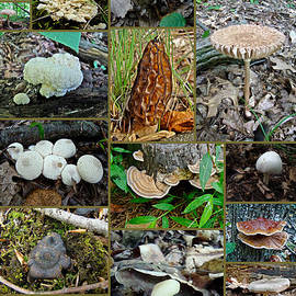 Mother Nature - Pennsylvania Mushrooms Collage - 3