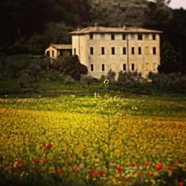 Monica Scanu - Il campo giallo
