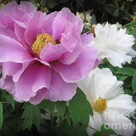 Photographic Art and Design by Dora Sofia Caputo - Peonies in White and Lavender