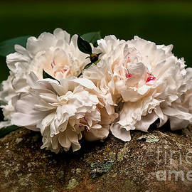 Lois Bryan - Peony Bouquet On Mossy Rock